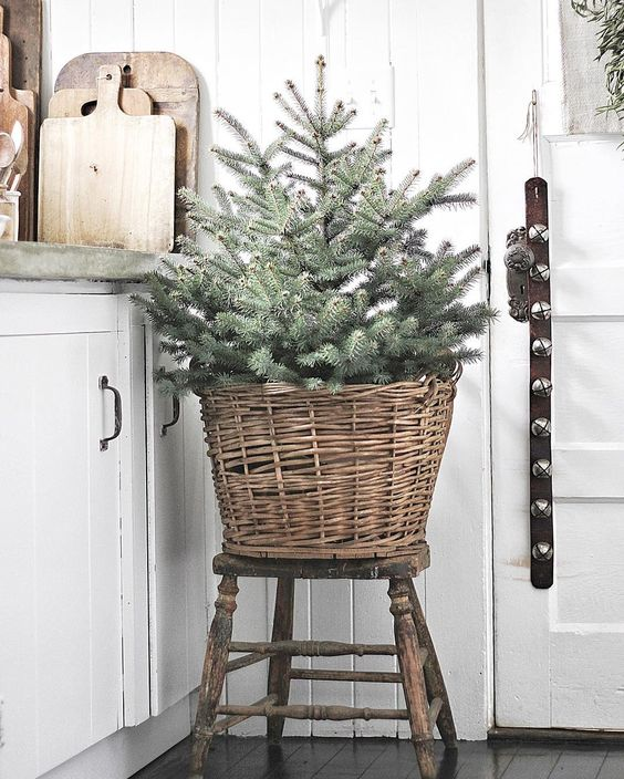 Kitchen Decorations For Christmas: Subscriber Newsletter