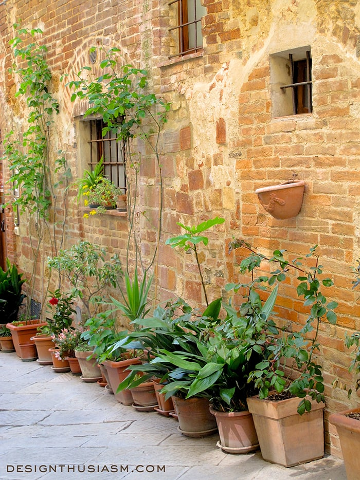 Pienza's potted plants