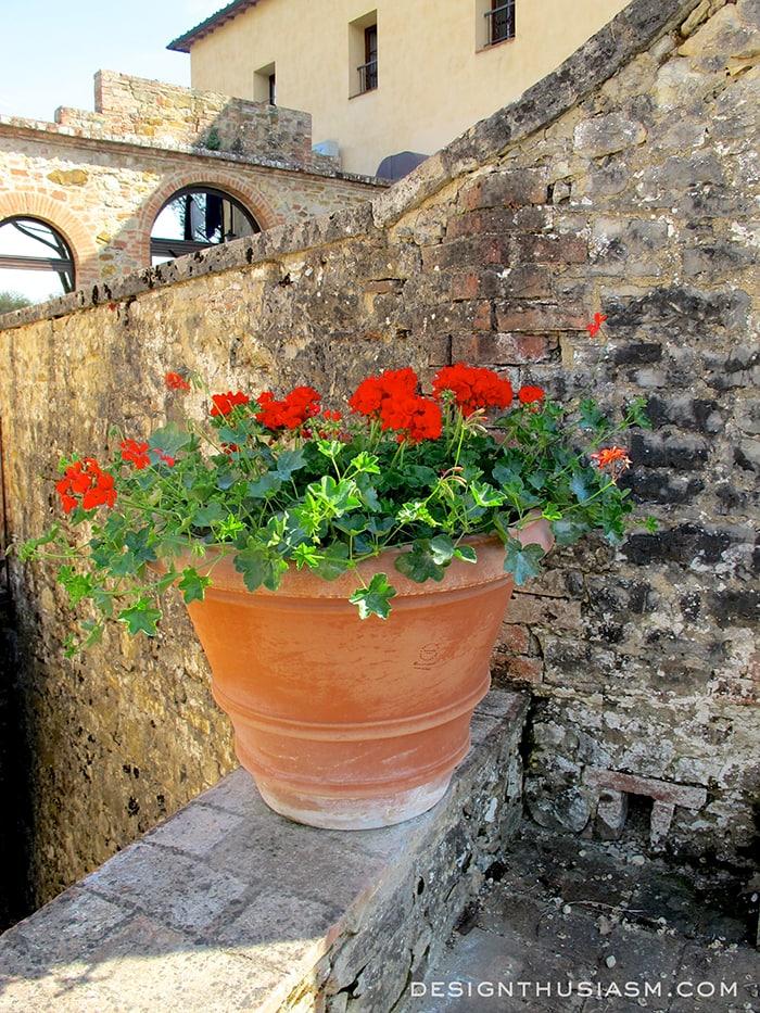 Pienza flowers