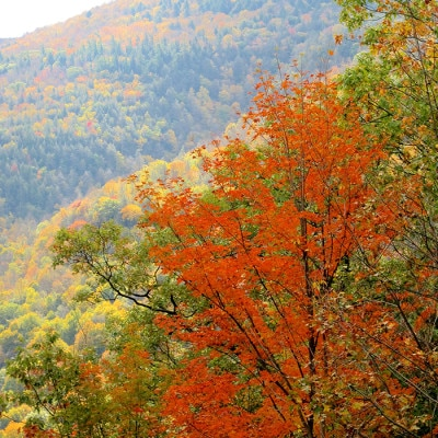 Fall Foliage and a Message for My Subscribers