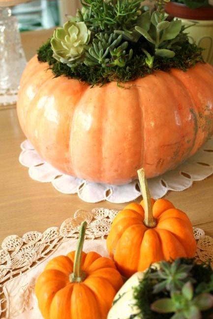 succulent-pumpkins2