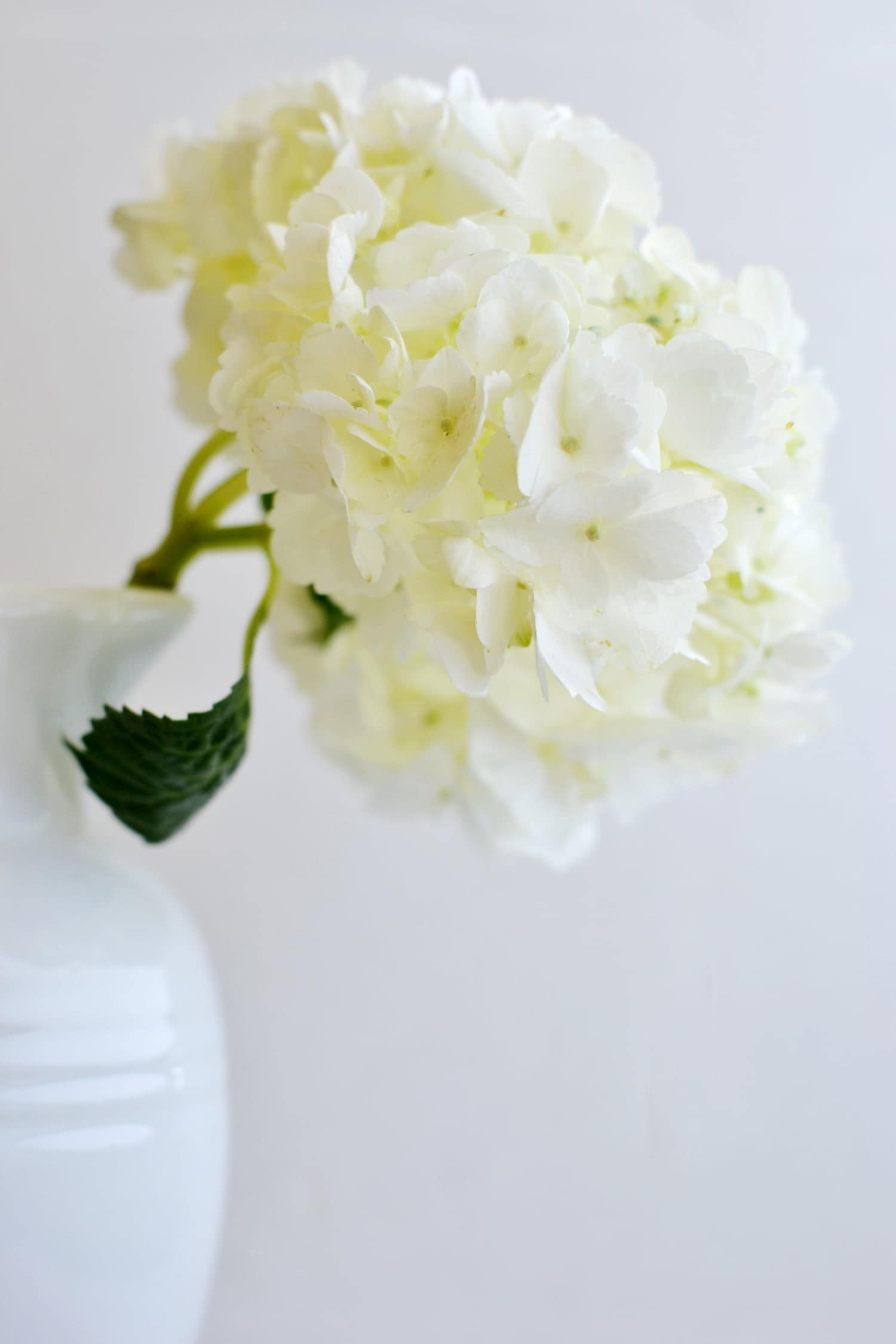Save+your+wilted+hydrangeas!+boxwoodavenue.com