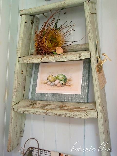 Lory Feature 1 - Green Ladder
