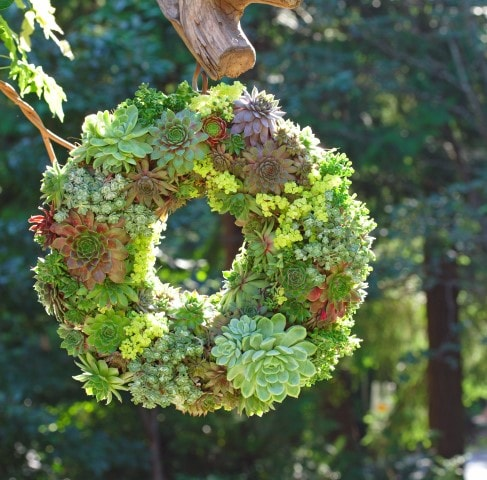 Instructions-on-how-to-make-this-beautiful-succulent-wreath-SQUARE-Small (1)