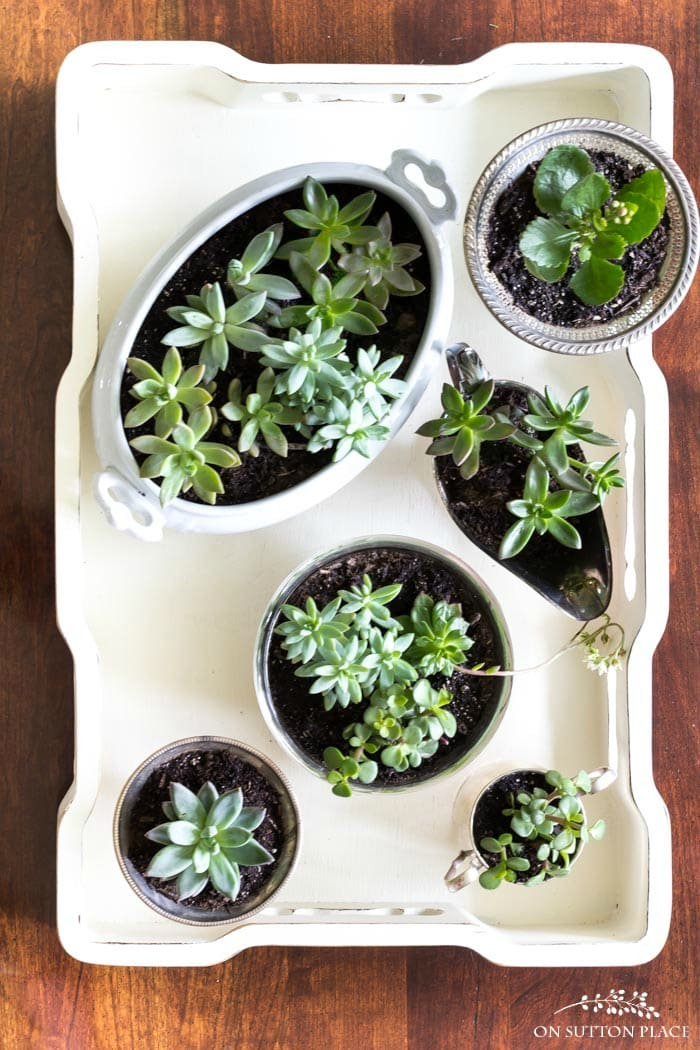 Coffee Table Succulent Garden from On Sutton Place