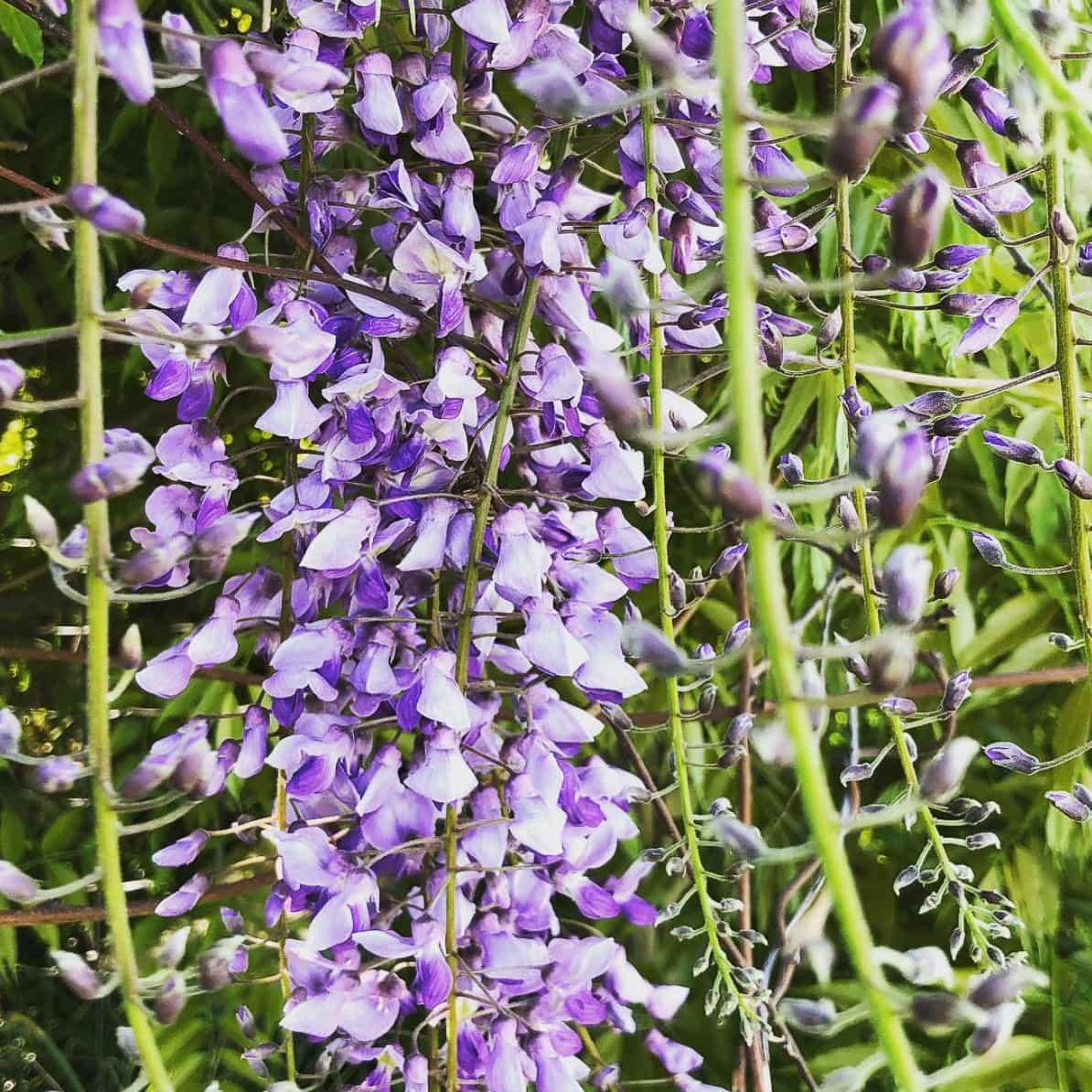 10 Things Every Beginning Gardener Should Know - Healing Harvest Homestead