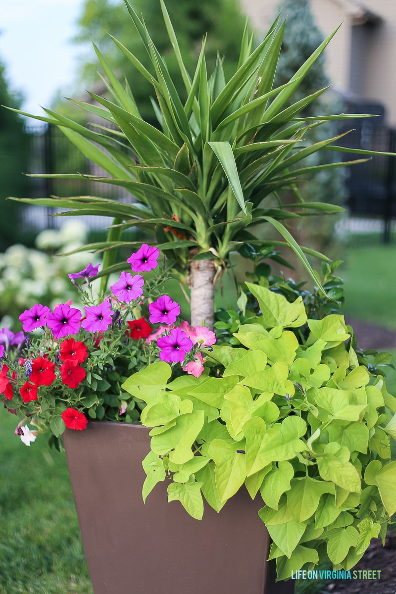 How to Creat the Perfecr Summer Planters - Life on Virginia Street