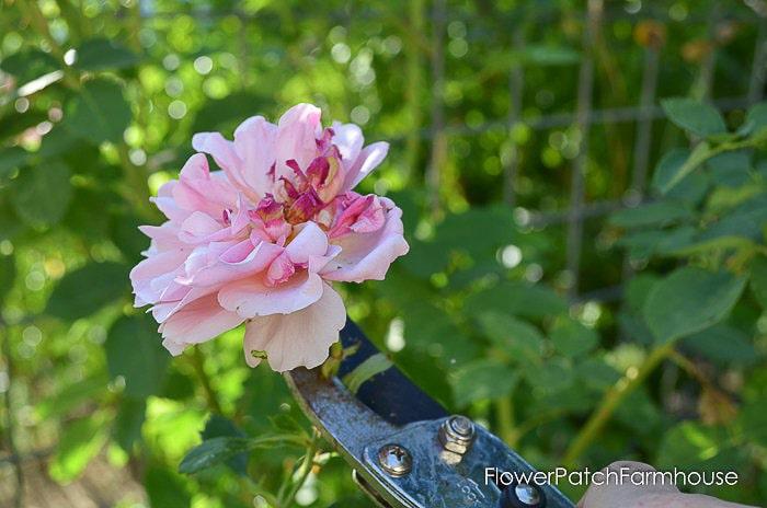 How to Dead Head Flowers-Flower Patch Farmhouse