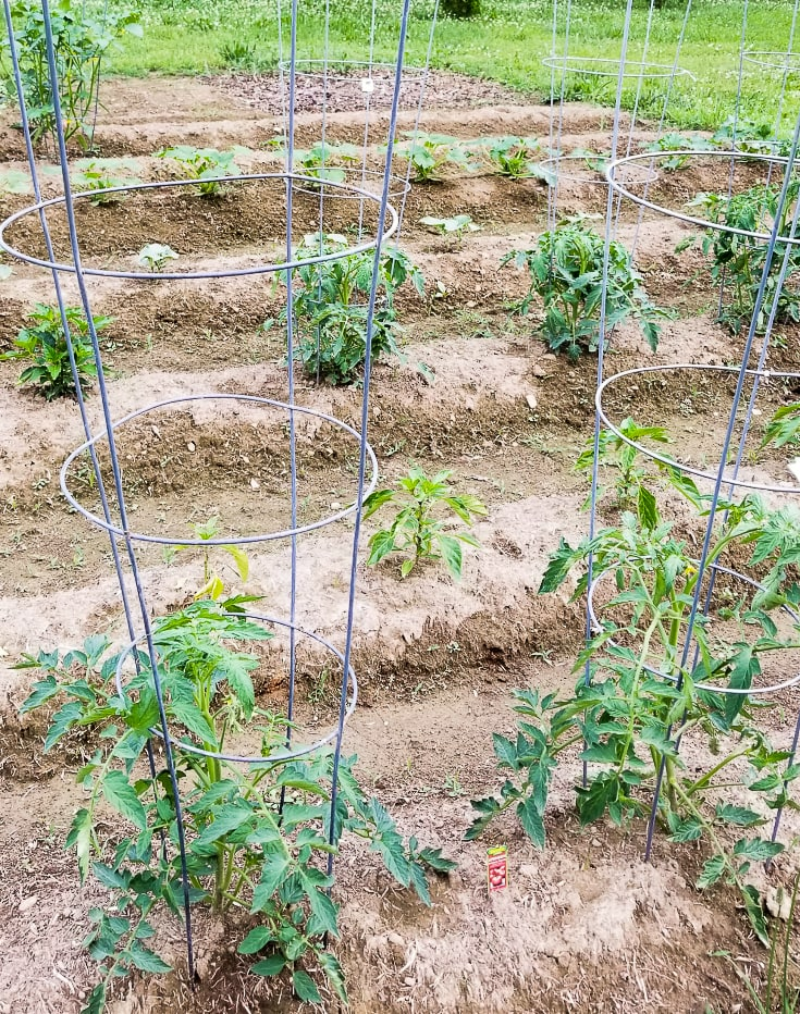 PLANTING A VEGETABLE GARDEN - Gwin Gal