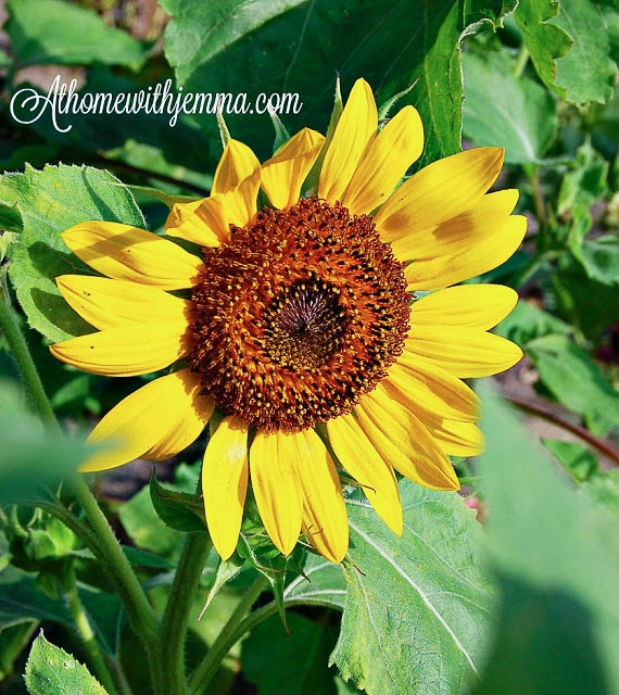 SUMMER GARDENING PRACTICES - At Home with Jemma