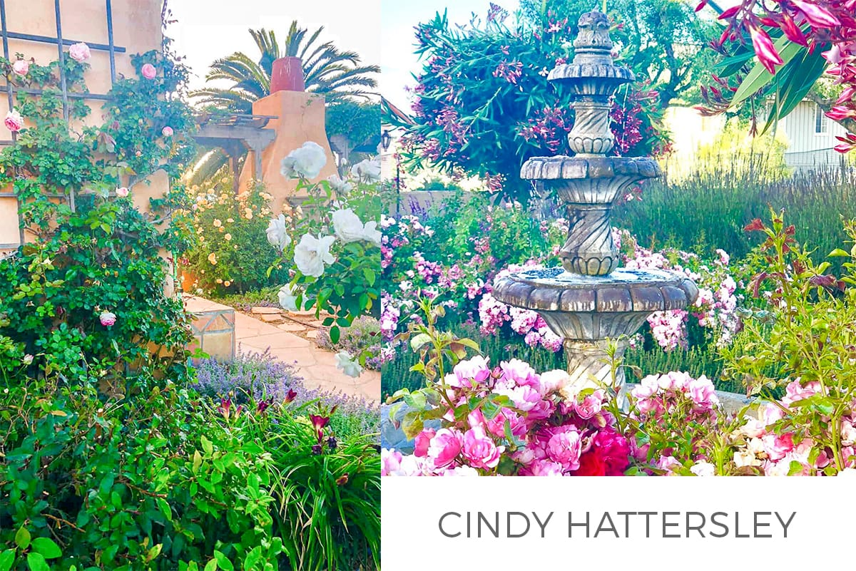 Cindy Hattersley FEATURE