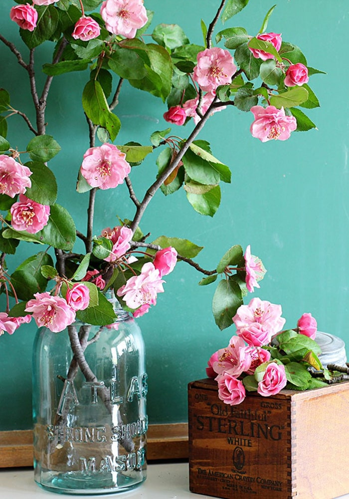 forcing-flowering-branches-spring-crabapple